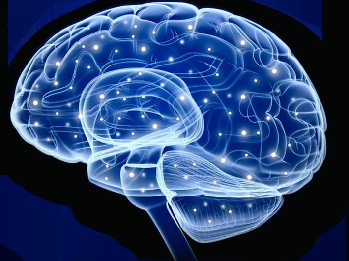 slider-brain